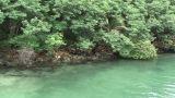 RiverInGuam01 mov 1 2 Stock Video Footage