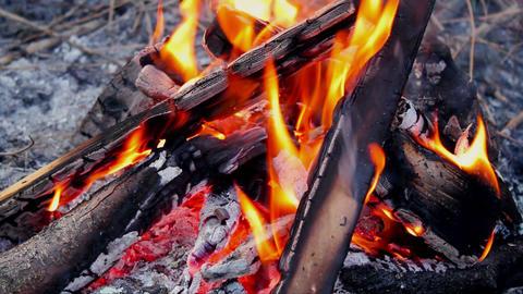 Bonfire Stock Video Footage