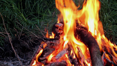 Bonfire Stock Video Footage