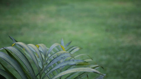 green blurred background with palm leaves Stock Video Footage
