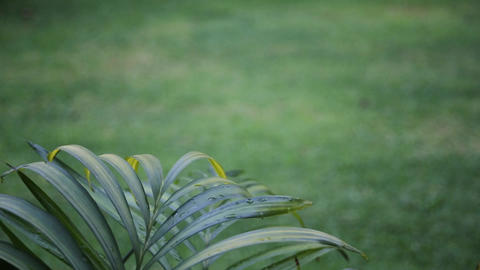 green blurred background with palm leaves Footage