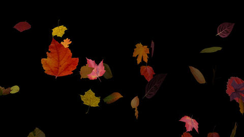 Falling Leaves 03 Stock Video Footage