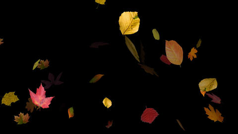 Falling Leaves 03 Animation