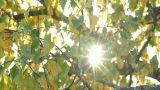 Autumnal leaves with sunbeams flickering through Footage