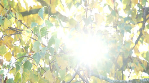 Autumnal leaves with sunbeams flickering through Stock Video Footage