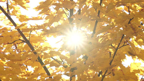 Autumn leaves with sunbeams flickering through Stock Video Footage