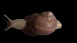 snail run isolated Stock Video Footage