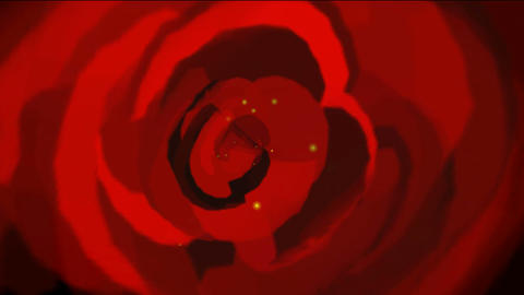rose opening time lapse with smooth rotation.lover Stock Video Footage