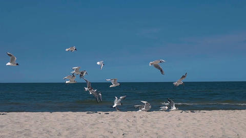 Seagulls flocking on a sandy beach slow motion 100fps Acción en vivo