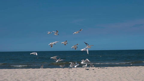 Slow motion shot of a flock of seagulls on a sandy beach 100 fps Footage