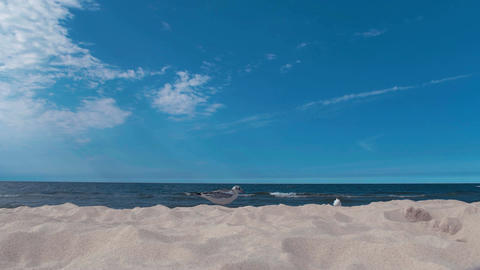 Seagull foraging along a sunny beach with a calm sea behind UHD 4K Acción en vivo