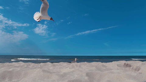 Two seagulls on the edge of a sandy beach in the sun UHD 4K Footage
