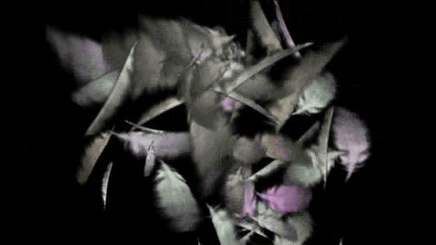 falling white feathers Stock Video Footage