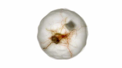 neurons fiber optic,cell nucleus division under... Stock Video Footage