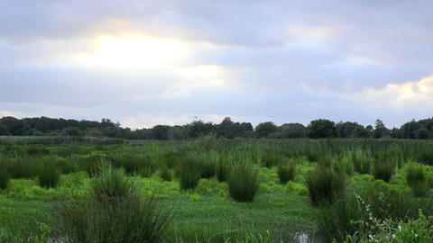 Marsh landscape Stock Video Footage