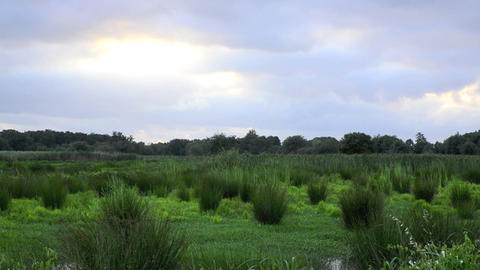 Marsh landscape Stock Video Footage