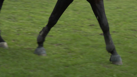 horse race jump close up 01 Stock Video Footage