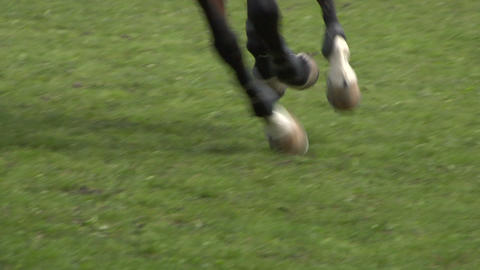 horse race jump close up 03 Stock Video Footage