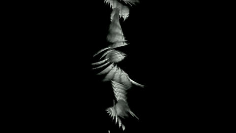 Rotation of white feather.Winds,cyclones,leaves,beautiful,decorative,mind,Feathers,poultry,material Animation