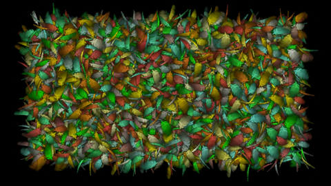 color gorgeous feather background.cotton,catkins,confusion,poultry,birdflu,Winds,cyclones,leaves,spo Animation