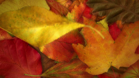 Falling Autumn Leaves - video background loop Stock Video Footage