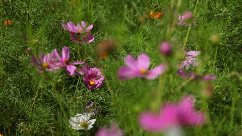 Wild flowers Stock Video Footage