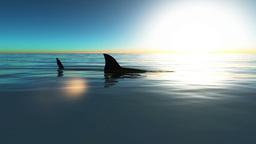 サメ Animation