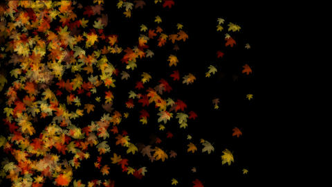group of golden maple leafs flying,seamless loop.Autumn maple,romantic,middle-aged,late autumn,symbo Animation