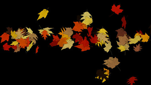 Maple leafs falling background.Grinding,debris,wind,cyclones,hurricanes,storms,wind,dream,vision,ide Animation