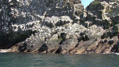 Bird colony. Islands in the Pacific Ocean Footage