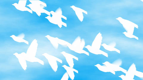 white birds flying on the sky Stock Video Footage