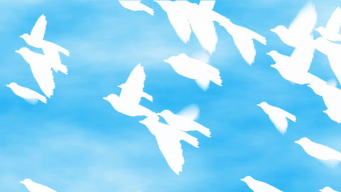 White Birds Flying On The Sky stock footage