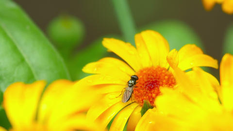 Fly On A Flower stock footage