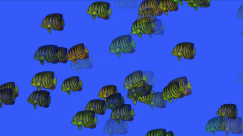 4k Aquarium Fish Underwater Background,sea Ocean Fishing Ecology Biological stock footage