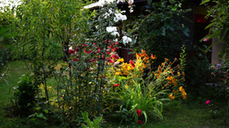 Garden With Flowers And Romanian Flag In A Corner, Panoramic And Tilt Movement Footage