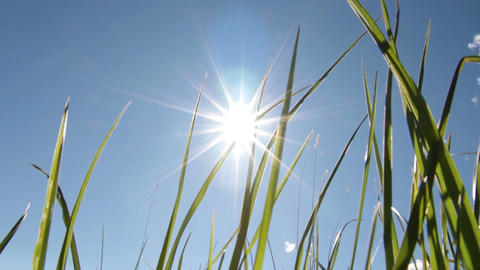 Sun and grass Footage