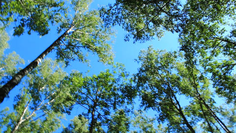 crowns of trees and blue sky Footage