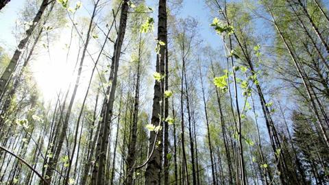 Springtime Forest Footage