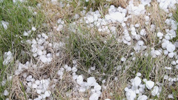 Large hail on the grass after the storm Footage