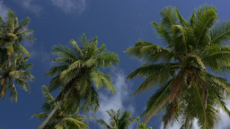 Palm tree and blue sky with white clouds Footage
