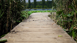 Wooden Pier On Lake With Reed And Lotus Leaf.Changing Focus stock footage