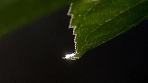 Raindrops on leaves after rain Footage