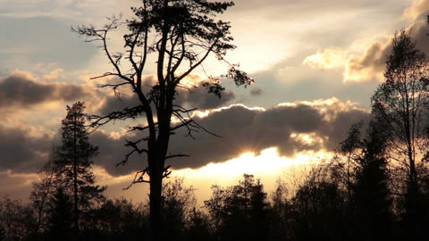 Evening sky and trees Footage