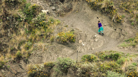 Quechua peasant woman with dog on unpaved countryside road Footage