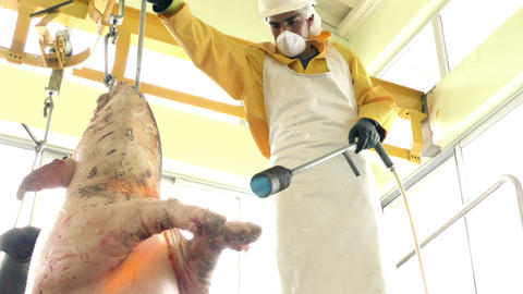 Slaughterhouse Worker Using Blowtorch Low Angle stock footage