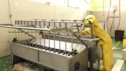 Equipment cleaning and sanitation in slaughterhouse Footage