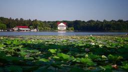 Lotus Flowers, Lake, Birds, Romanian Flag Footage