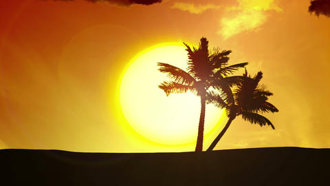 Tropical Sunrise, Palm Trees, Clouds - 4k sunset Footage