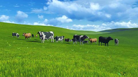 Herd of cows on pasture Footage