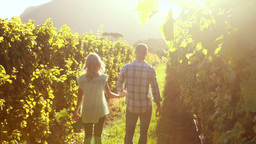Couple walking hand in hand between grapevine Footage